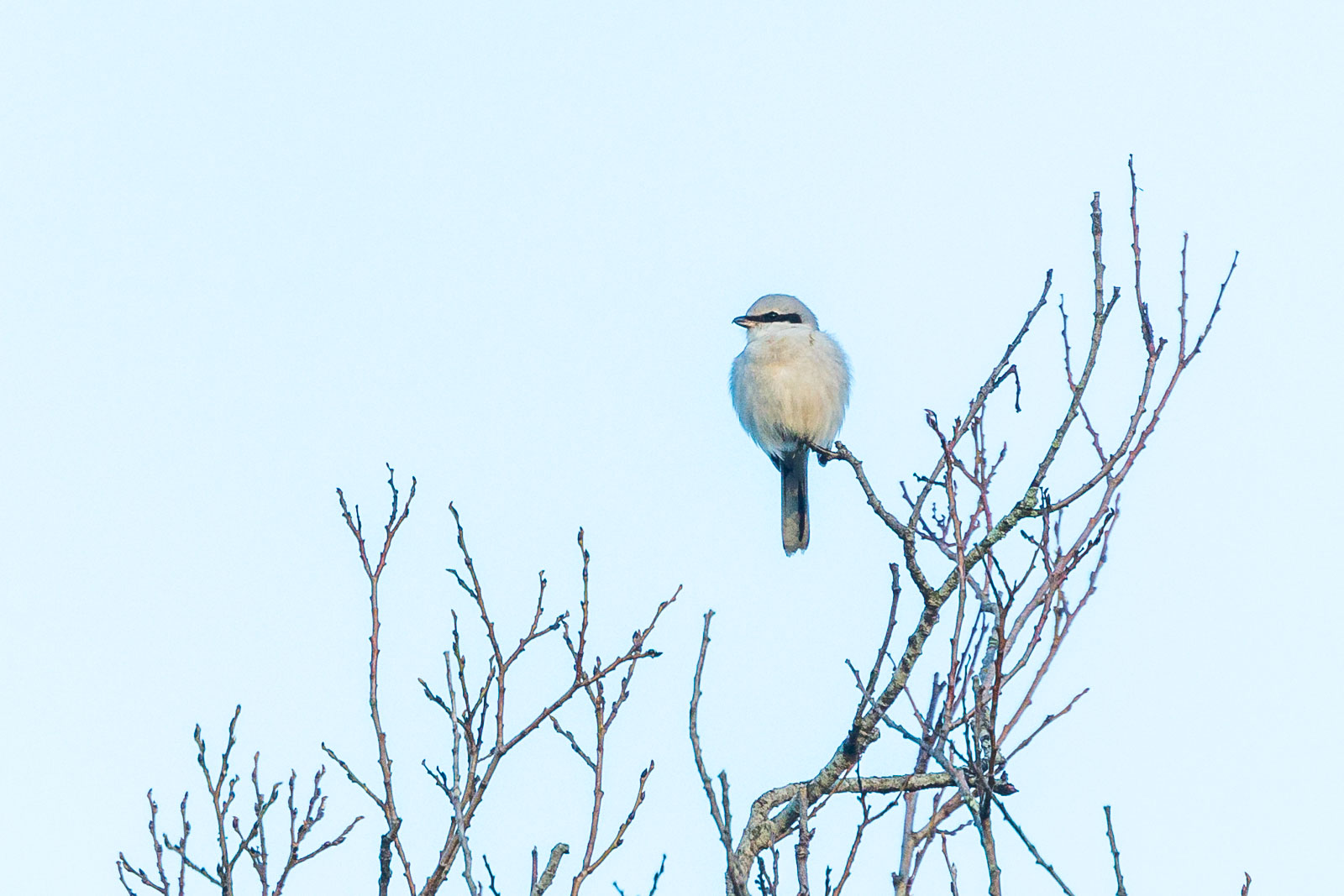 Varfågel spanar