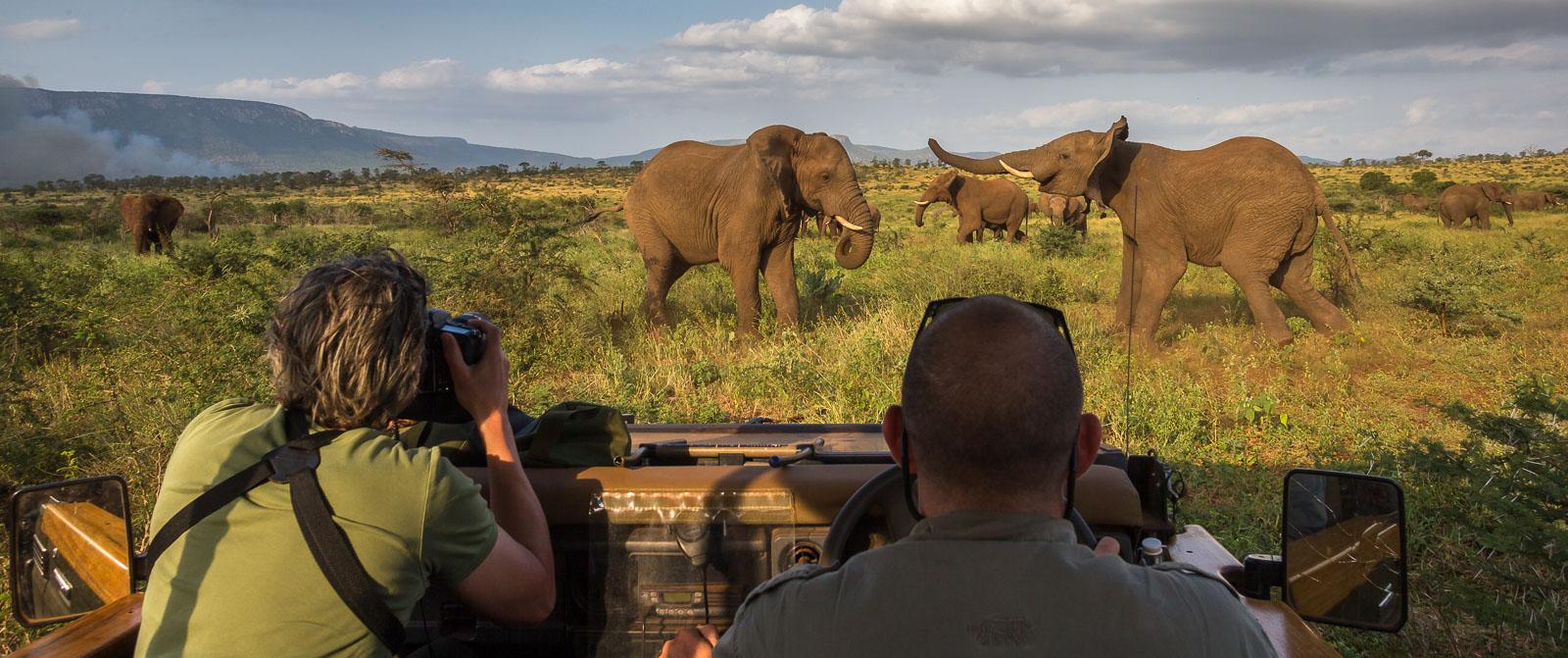 Elefantfotografering