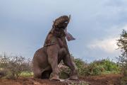 Elefant reser sig från gyttjan