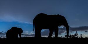 Elephants against blue sky