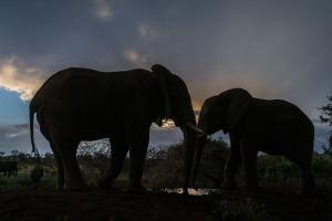 Elephant silouettes