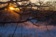 Solnedgång i frostigt landskap