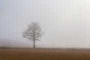 Ensamt träd i vårdis