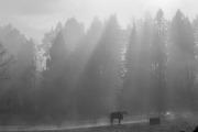 Solstrålar över hästhage