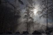 Snösläpp i motljus