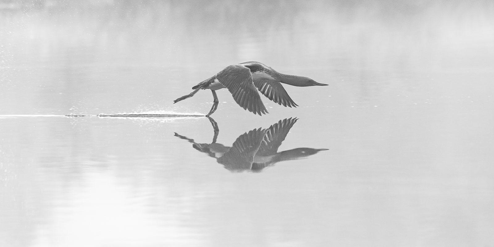 Morning mist flight